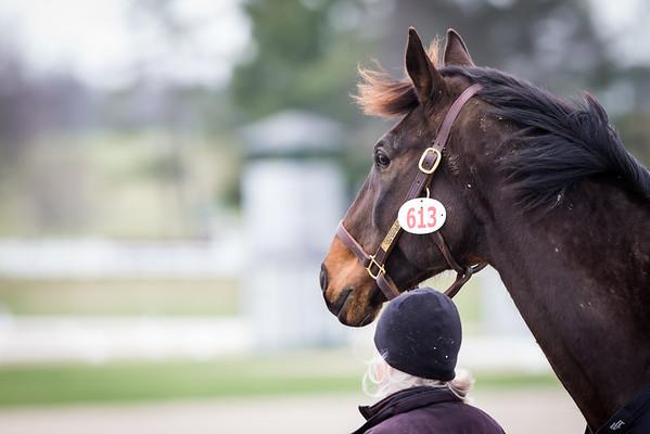 Paul Frazer Horse Show