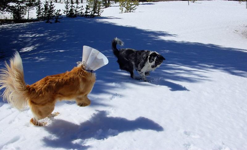 Snow games, Carson Pass