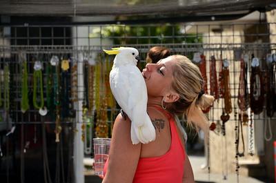 Clifton  (Athenia ) Street Fair
