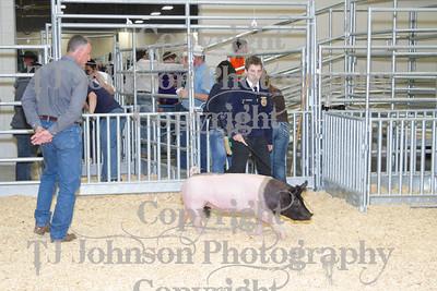 2013 Klein ISD Swine Class 1