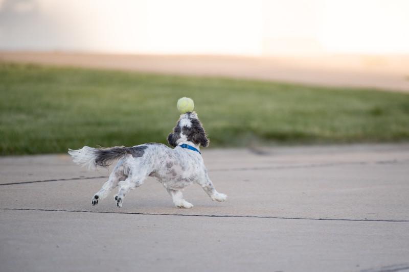 LuLu - Brady - Cooper Play Friends (17 of 109).jpg