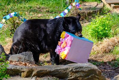 Bear Birthday 2019