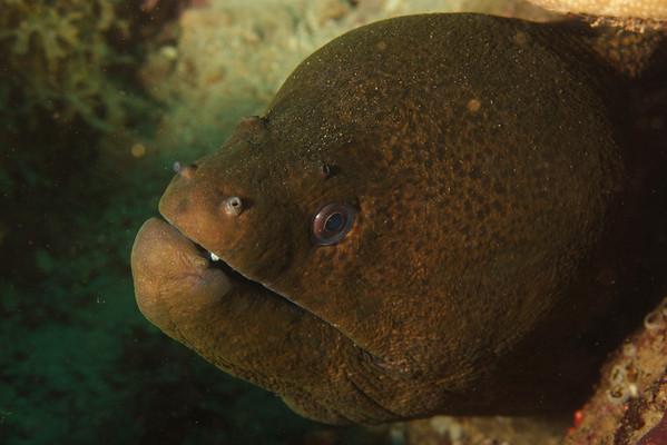 Djibouti 2011 - Fish