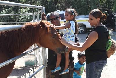 Wild Horse & Burros