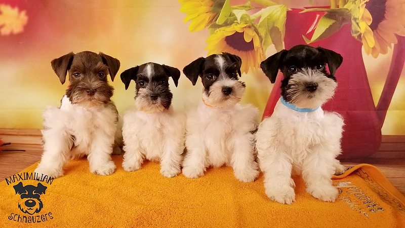 Julie Puppies 006.jpg