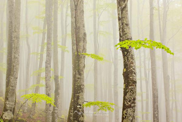 Diálogos con el bosque