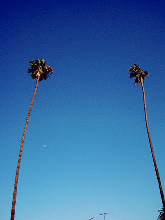 PALMS IN CONTEXT