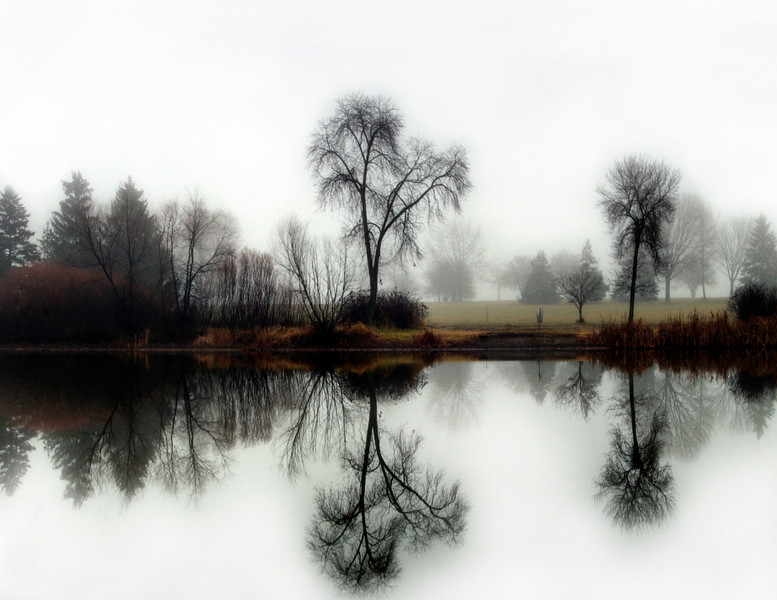 Fog treestFog Reflections in the winter.jpg