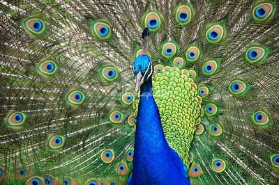 Birds of Ranthambore