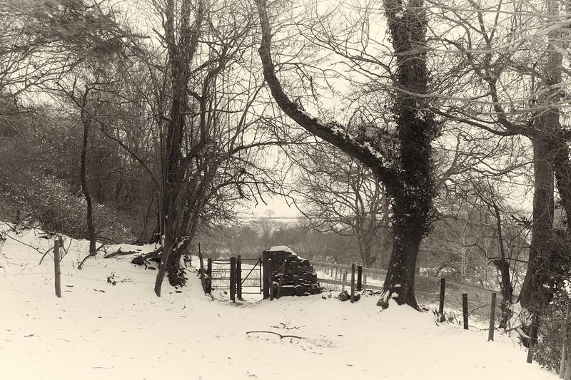 Snow Mar18 11.jpg