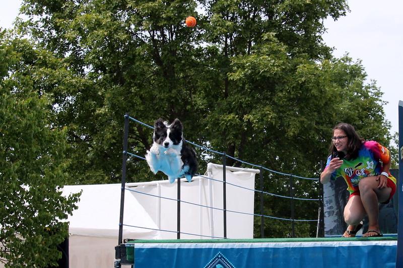 2015.8.6 Winnebago County Fair Dock Dogs (39).JPG