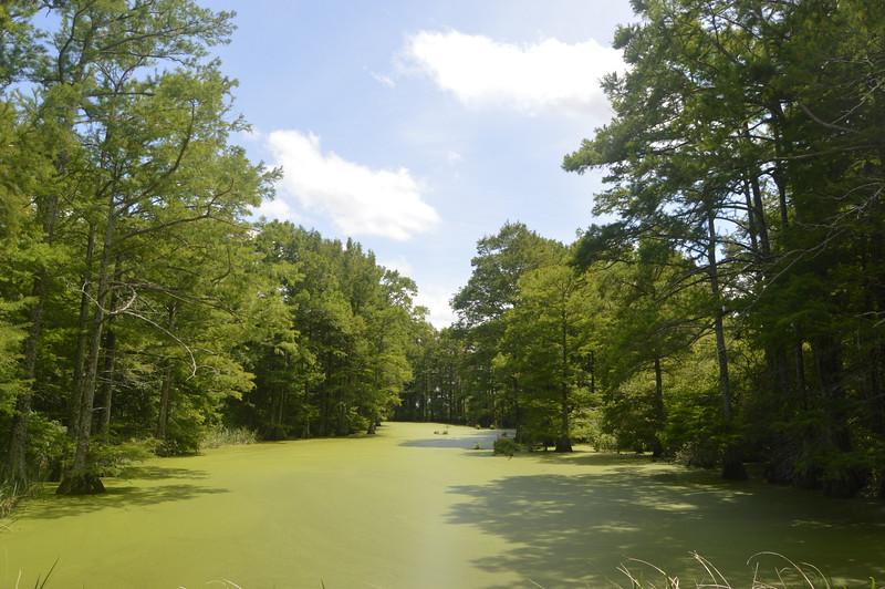 053 Swamp Near Walnut Lake.JPG
