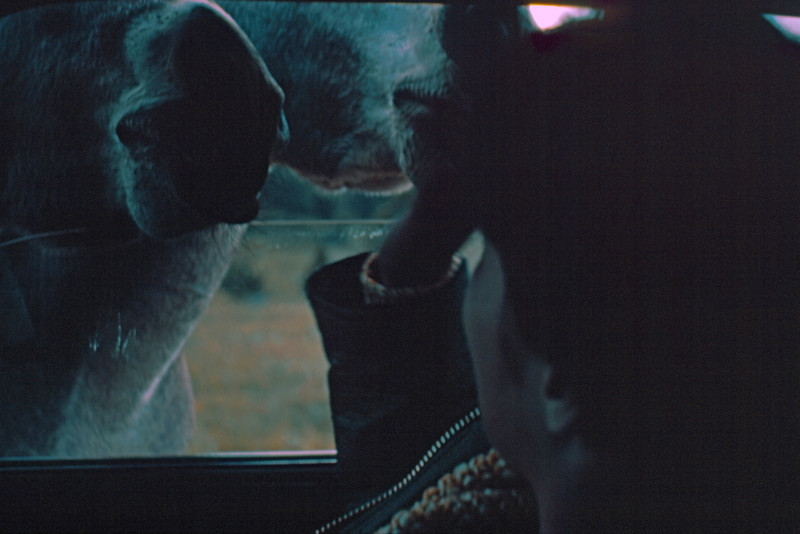 1965-09 - Black Hills - Custer State Park mule