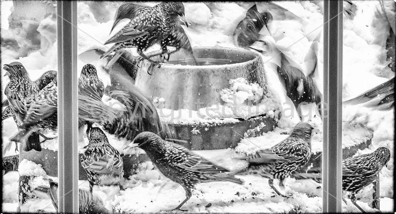 Birds -- Winter #2