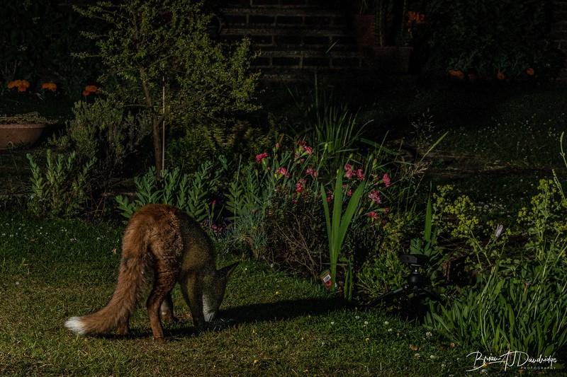 Garden Night Shoot-7338.jpg