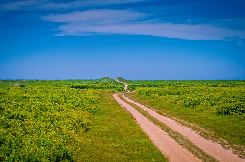 Where you lead, I will follow - Long Point Widelife Refuge, Marthas Vineyard.jpg
