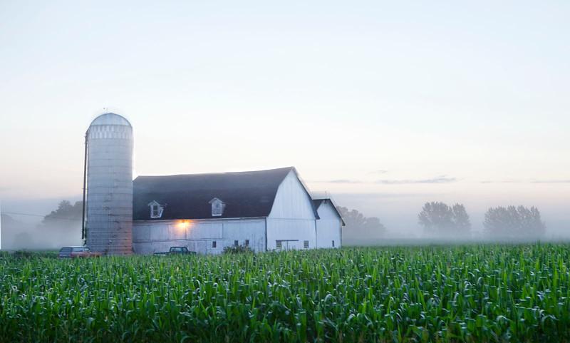 Dawn mist in farmland, Wisconsin