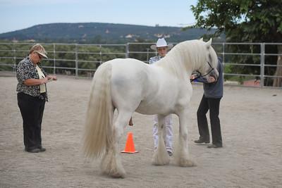 Fantasy Feather Gypsy Horses