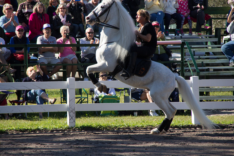 Hermann's Royal Lipizzan Stallions Royal Lipizzaner Stallions, Flying horses, Florida