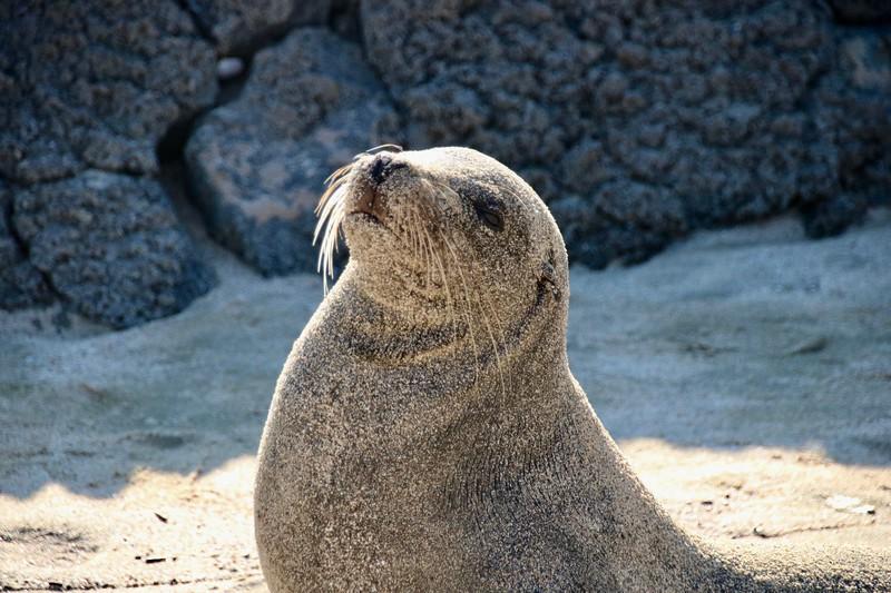 Sea Lion = Galapagos