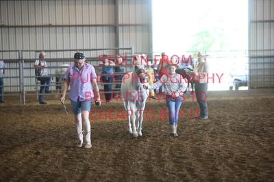 Class 2 Halter Class - Pony