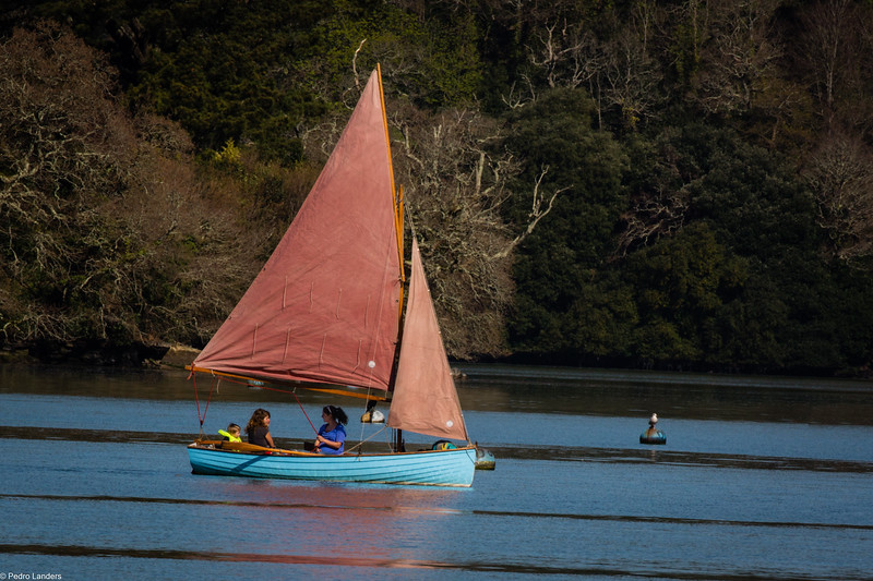 Swallows and Amazons?