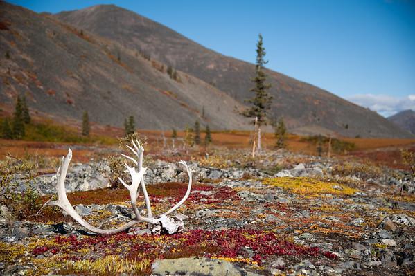 Sur la Porcupine River (Yukon)