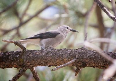 2014 Birding