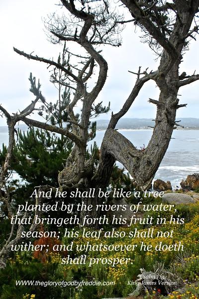 Psalm 1-3  .JPG