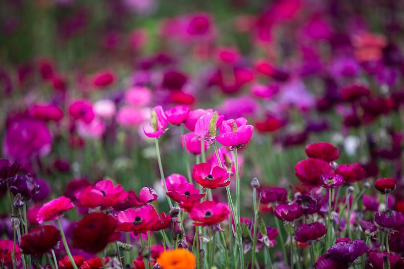 Spring Flowers B-409.jpg