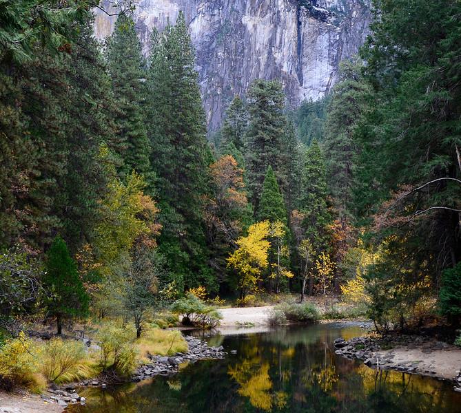River- Trees JPG.jpg