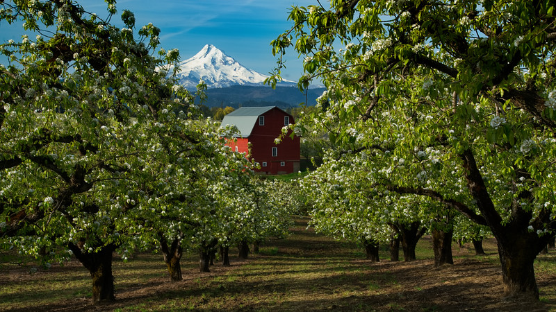 Hood River Valley, OR