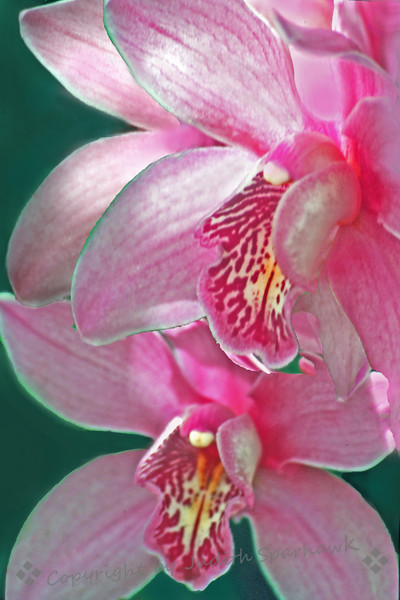 Orchids Three.jpg