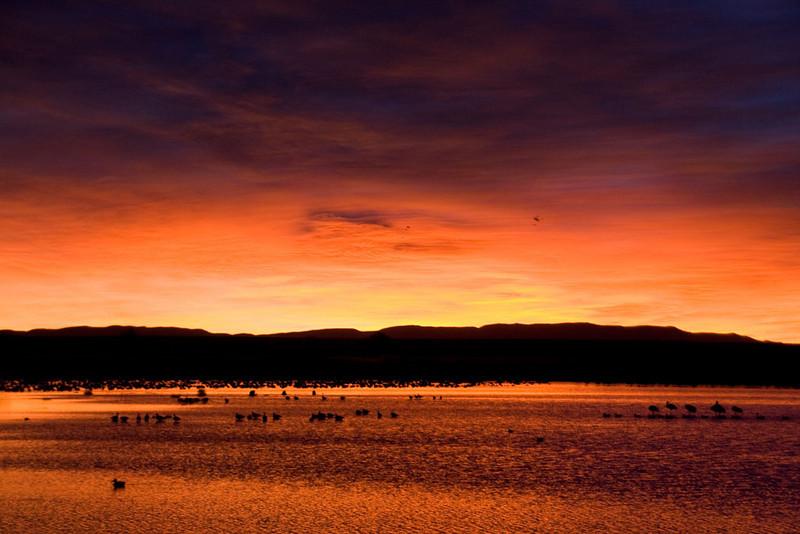 Sunrise at Bosque del Apache