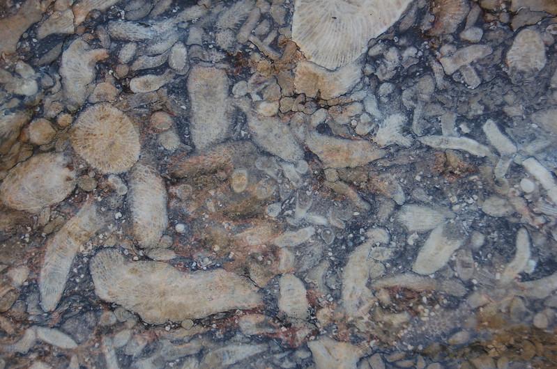 Fossil-coral-falls-ohio-reef.JPG