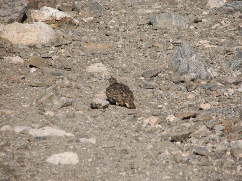 Torreys Peak 7-13-06 042.jpg