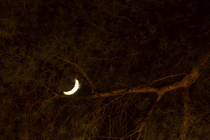 Moon seen through tree branches. (Dec 13, 2007, 06:42pm)