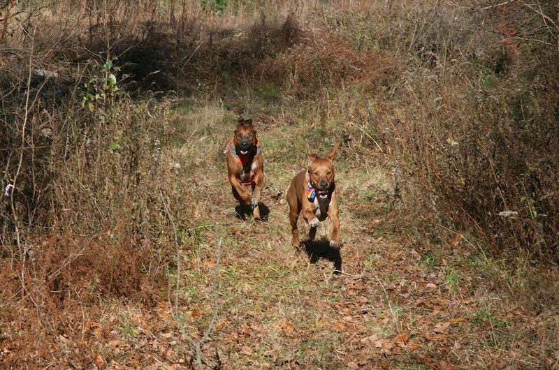 Lucky and Dex on the Run 2 at DH