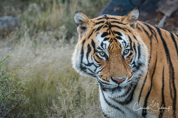 Tiger Canyons