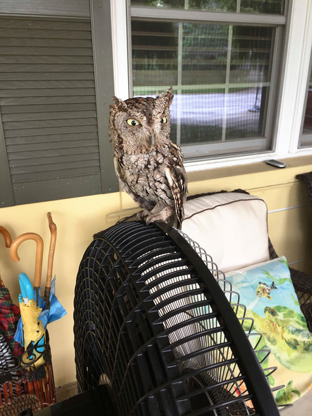 12_5_19 Owl On Front Porch Fan.jpg