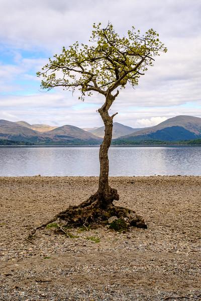 20190505 Loch Lomond 035.jpg