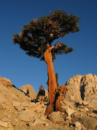 Mount Whitney Hike (2002)