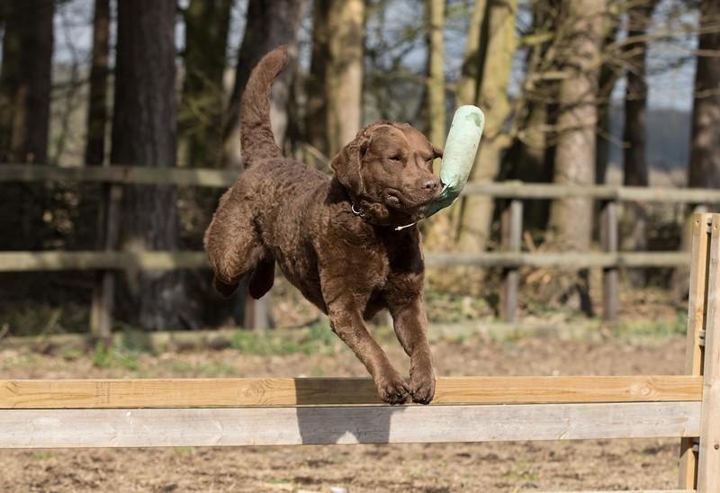 Dogs-5727.jpg