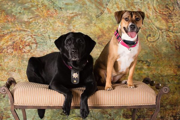Doggy Pamper Day @ Tuxedo Bark Club with ClicksbyKaren