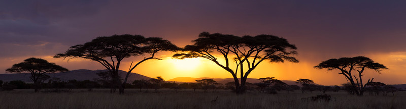 Sunset over acacia trees and savannah, Serengeti National Park