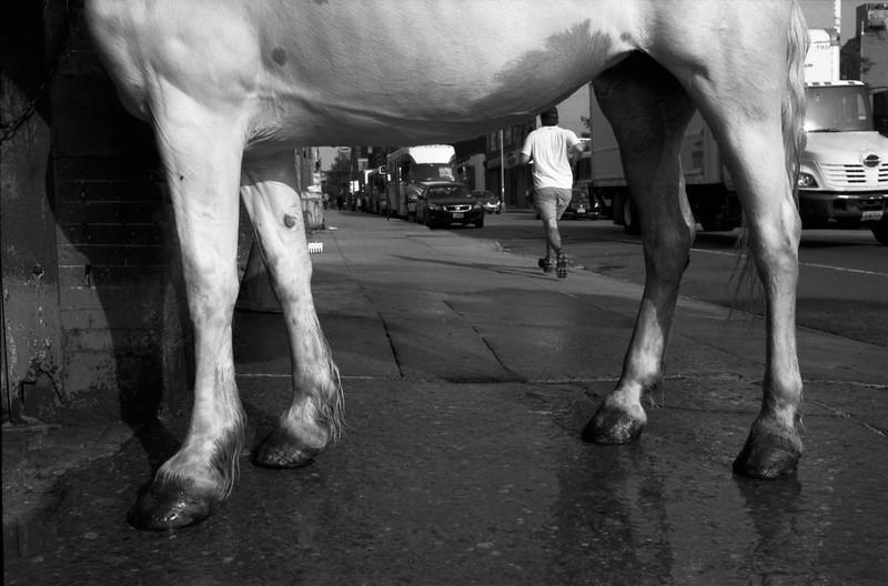 White-Horse-4.jpg