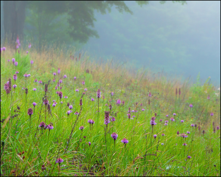Misty meadow NY-.jpg