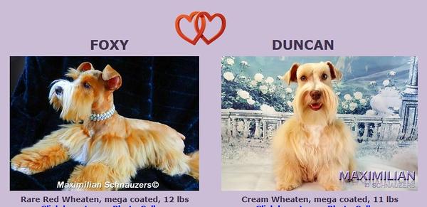 Foxy & Duncan Puppies, 12/28/2018