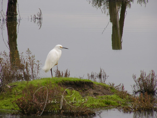 Egrets and Herons 2003-4