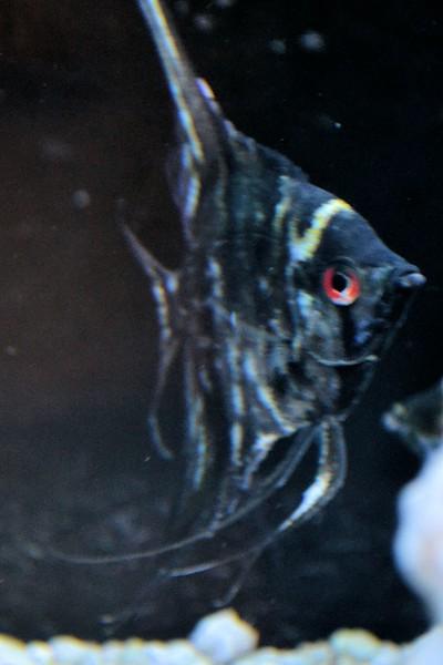 fish (7).jpg